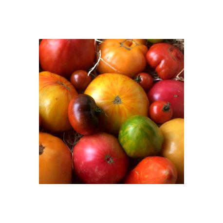 Mélange de tomates anciennes 1Kg